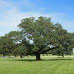 Праздник древонасаждения (День Арбориста) в США